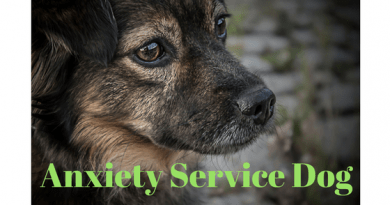 anxiety service dog